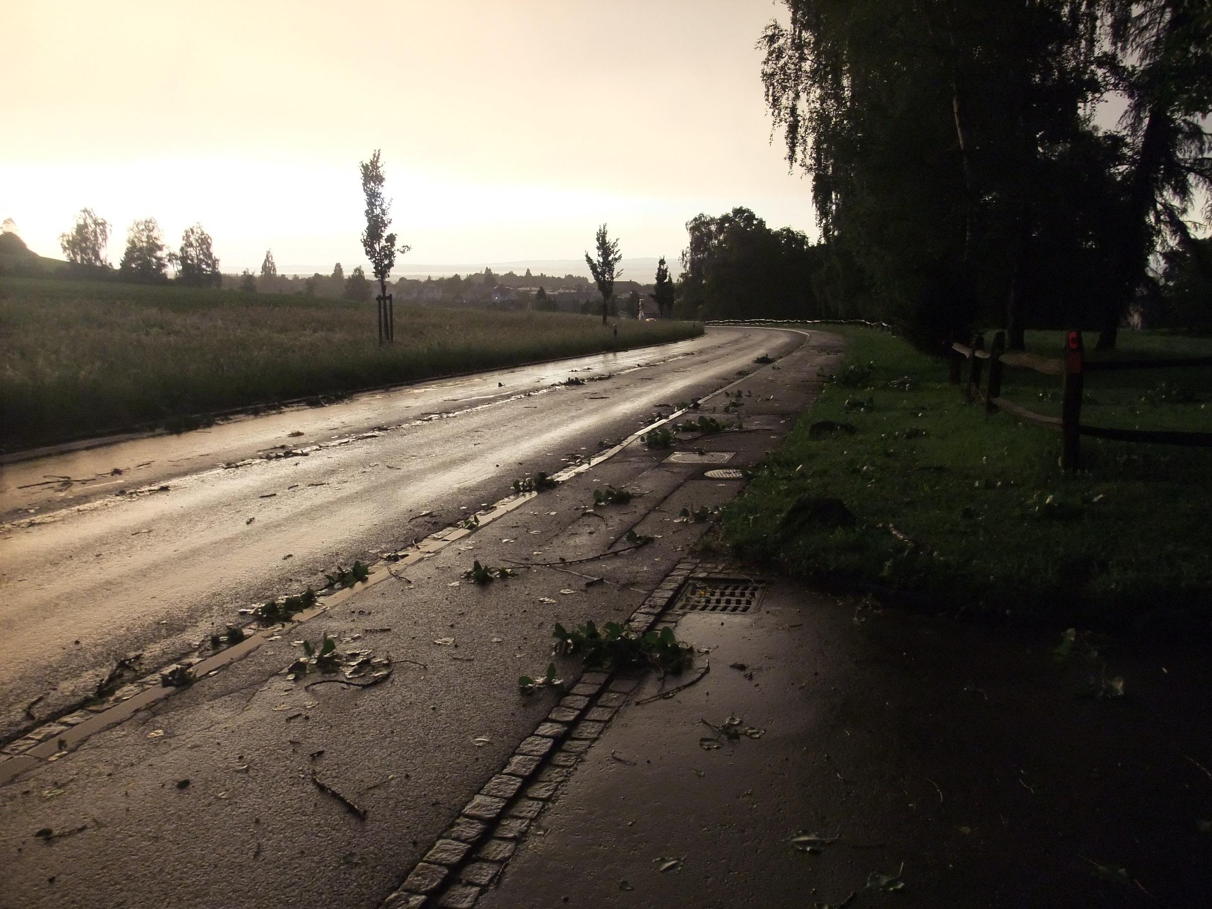 Nach dem Sturm zwischen der Bitzi und dem Alberenberg