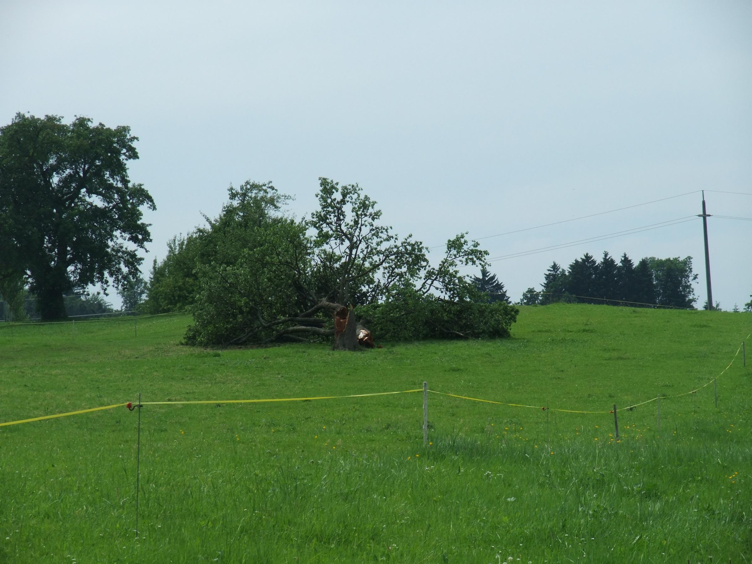 Abgerissener Baum