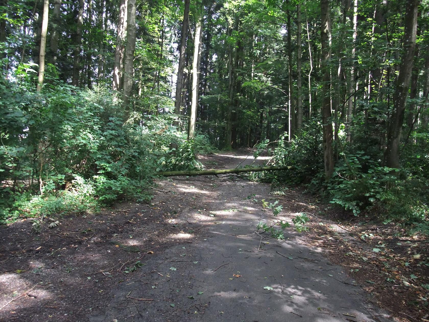Umgestürzter Baum im Guggeienwald