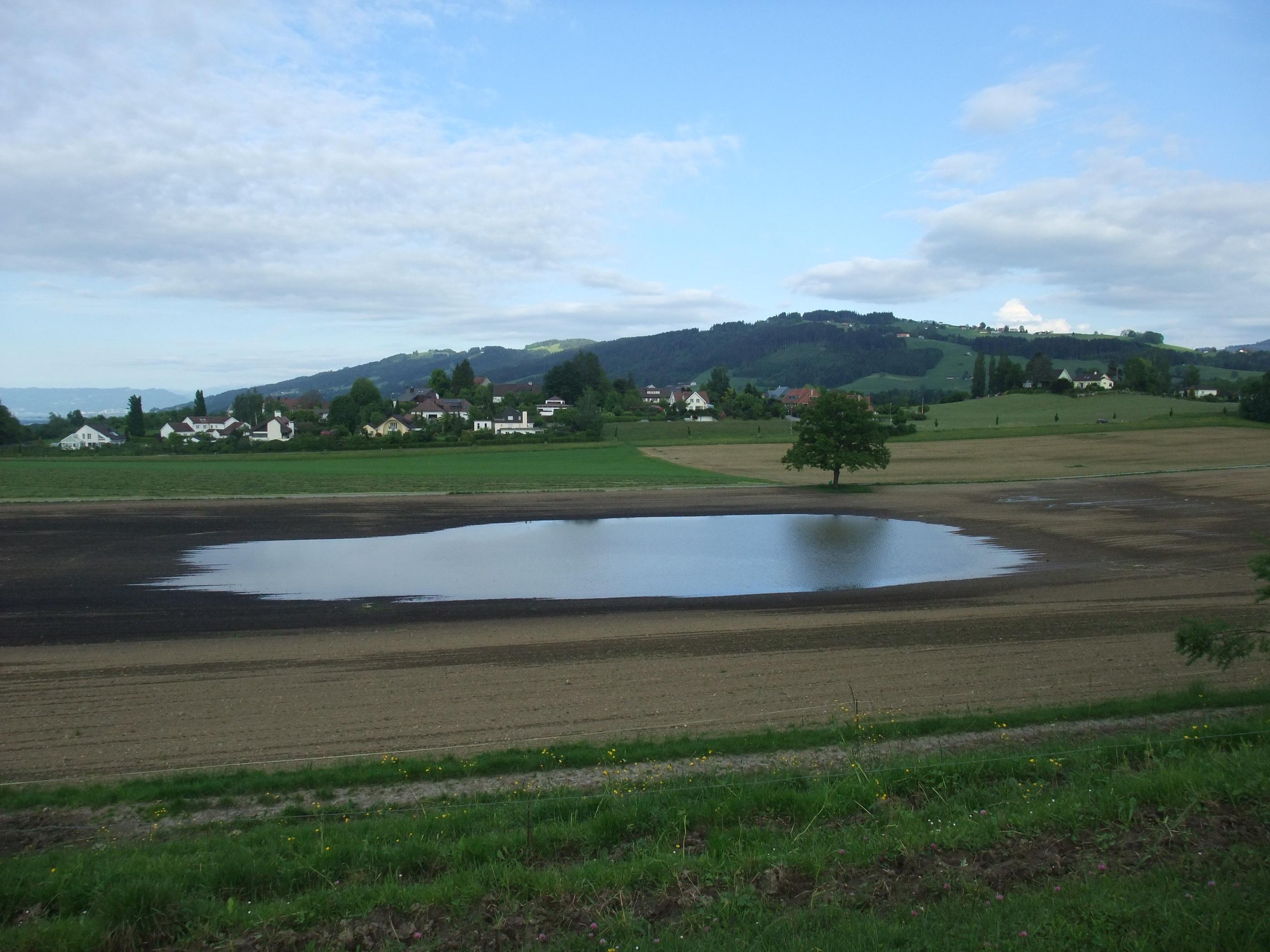 See auf einem Feld beim Alberenberg